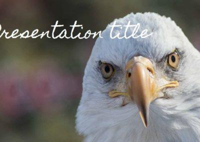 Birds. Plantilla Power point Gratis, tema Google Slides y Keynote