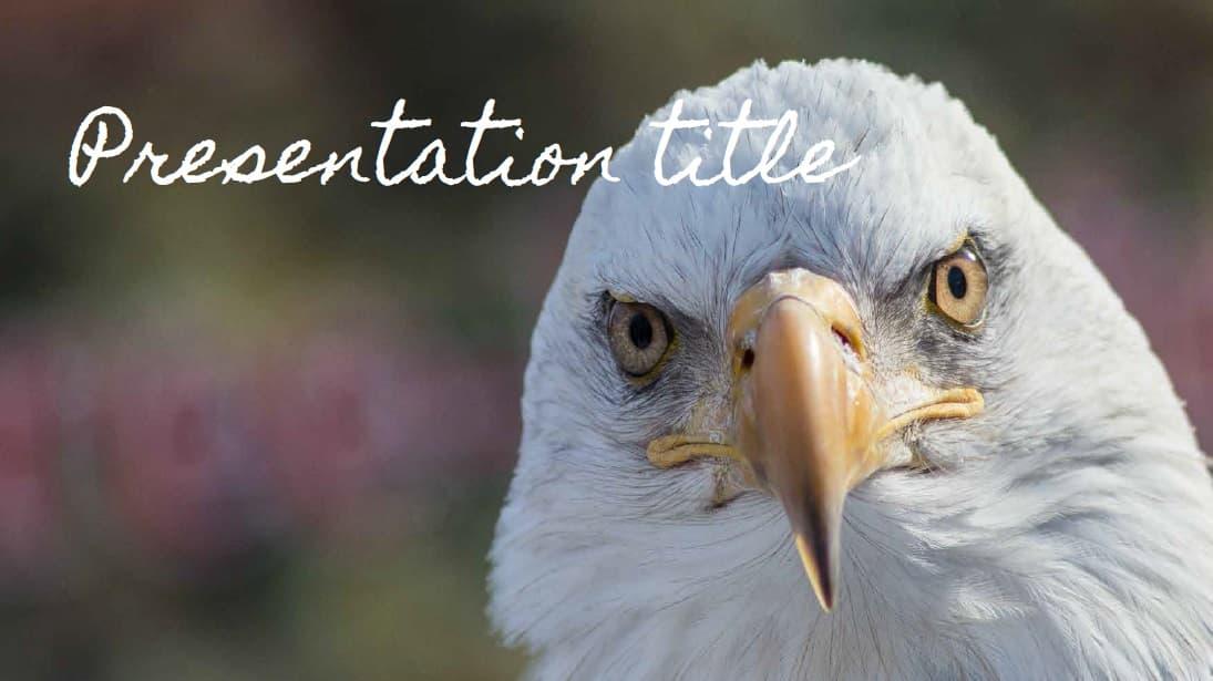 Birds slidesforeducation template